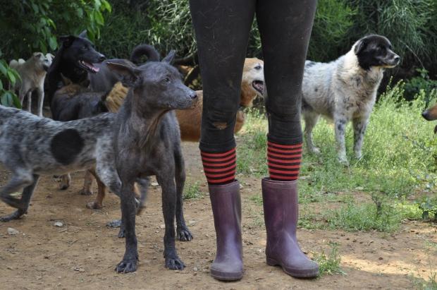 josie dog legs