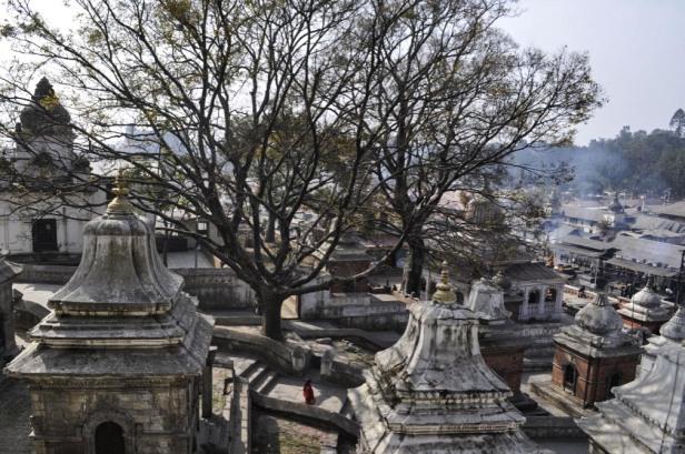 Pashupatinath tree