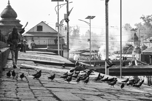Pashupati man birds